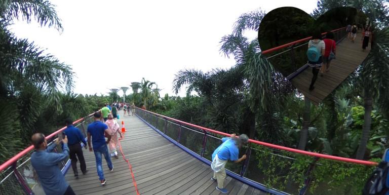 bridgetosupertrees